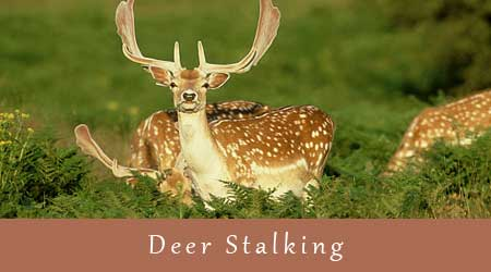 deer stalking experiences with our knowledgeable guides in the Home Counties