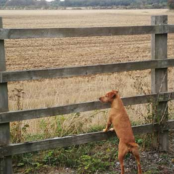 gundogs form an important part of the shooting team