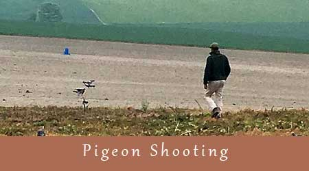 year round pigeon shooting | BASC good shooting guides adhered to